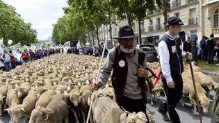 Des bergers défilent à Paris avec leur bétail, à Paris, le 23 juin 2013 pourprotester contre la flambée des charges de production et le blocage des prix. (MIGUEL MEDINA / AFP)
