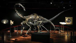 Les squelettes de deux dinosaures, vendus aux enchères, à Paris, le 11 avril 2018. (STEPHANE DE SAKUTIN / AFP)