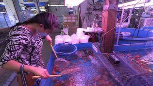 ÀBangkok, en Thaïlande, le marché aux poissons d'ornement de Chatuchak est le plus grand du monde. Il regroupe les espèces les plus étranges. Un poisson particulièrement rare peut coûter jusqu'à 25 000 euros. (CAPTURE ECRAN FRANCE 2)