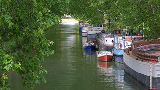 Les platanes du canal du Midi sont menacés par un champignon ravageur et doivent être détruits. (AFP)