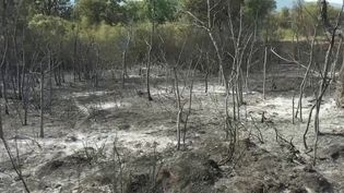 Var : le massif des Maures a été dévasté par les incendies (France 2)