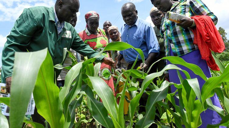 Formation pour des agriculteurs à Vihiga, au Kenya, le 18 avril 2018. Cetteferme de maïs a été attaquée par la chenille légionnaire, qui a colonisé en deux ans les trois quarts de l'Afrique. (SIMON MAINA / AFP)