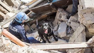 Un secouriste et son chien cherchent des signes de vie dans les débris de bâtiments effondrés àPescara del Tronto (Italie) le 25 août 2016 au lendemain d'un séisme. (MAURO UJETTO / NURPHOTO / AFP)