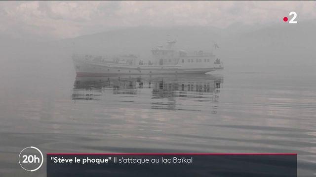 Stève le phoque et la traversée du lac Baïkal : à la rencontre d'un nageur pas comme les autres