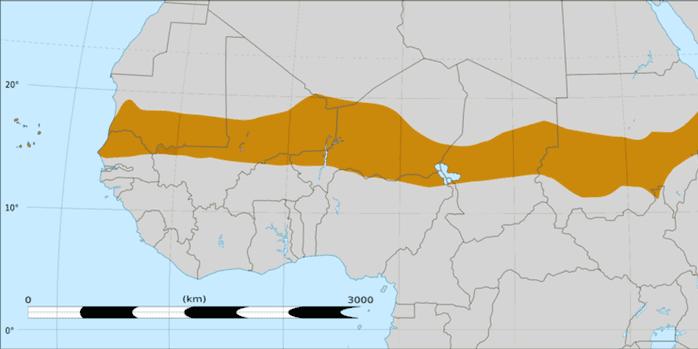 LaLa « bande » du Sahel. ( Felix Koenig/Wikimedia, CC BY)