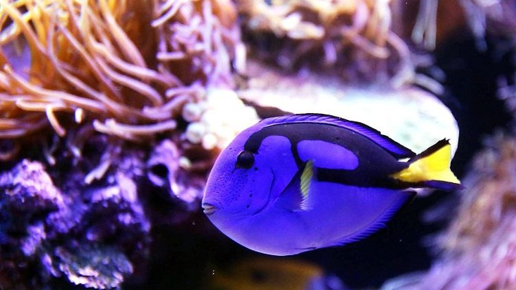 Le musée Océanographique de Monaco rassemble plus de 6000 espèces de poissons des océans du monde entier  (PHOTOPQR/NICE MATIN)