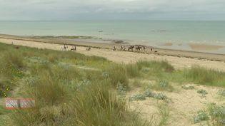 Préserver l'environnement et sensibiliser le plus grand nombre, ce sont les objectifs tenus à Gouville-sur-Mer, dans la Manche, la dune est régulièrement fragilisée par les grandes marées. (FRANCE 3)
