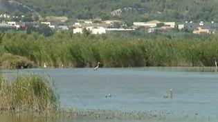 L'étang de Berre (Bouches-du-Rhône) pourrait bientôt être inscrit au patrimoine mondial de l'Unesco, une candidature a été déposée par la mairie de Martigues. (France 3)