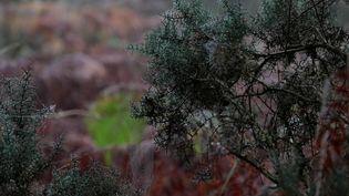 Morhiban : les landes de Lanvaux, la beauté sauvage des forêts bretonnes (France 2)