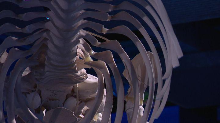 Squelette de baleine (France Télévisions / France 3 La Rochelle)