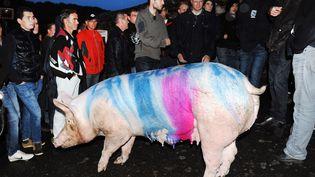 """Des éleveurs de porcs manifestent devant la sous-préfecture de Morlaix (Finistère) avec une truie baptisée """"La Folle"""", en référence au ministre de l'Agriculture, Stéphane Le Foll. (FRED TANNEAU / AFP)"""