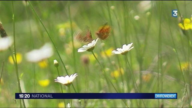 Biodiversité : les bienfaits des prairies fleuries