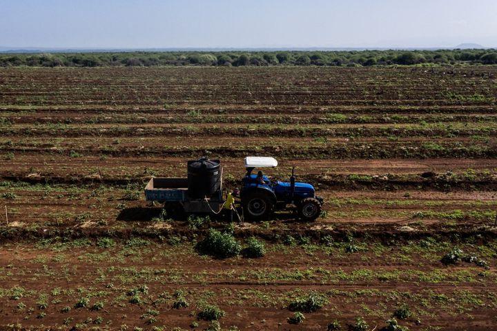 tracteur et irrigation sur plus de 70 hectares de plans d'avocats. La ferme du groupe KiliAvo Fresh, protégée par des clôtures électriques, menace le déplacement des éléphants. (- / AFP)