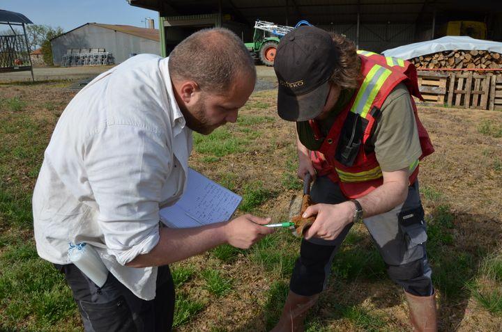 Les géologues de Variscan, Jérôme Gouin (à gauche) et Maxime Picault (à droite), examinent un prélèvement de sol,le 15 avril 2015 à Montrevault (Maine-et-Loire). (THOMAS BAIETTO / FRANCETV INFO)