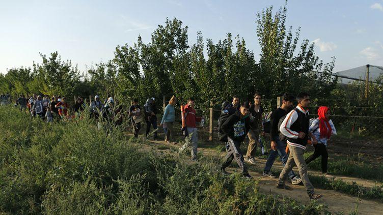 (Des migrants marchant le long de la frontière entre le Serbie et la Croatie, près le ville de Sid, ce mercredi © REUTERS - Antonio Bronic)