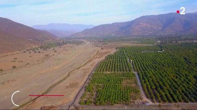 Chili : quand la culture de l'avocat prive les habitants d'eau