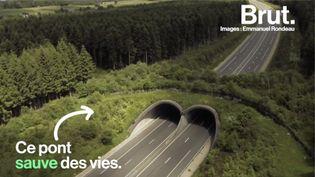 VIDEO. Ces ponts aident les animaux à traverser les autoroutes sans risquer leur vie (BRUT)