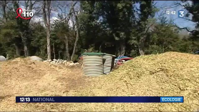 Les multiples bienfaits du recyclage du buis