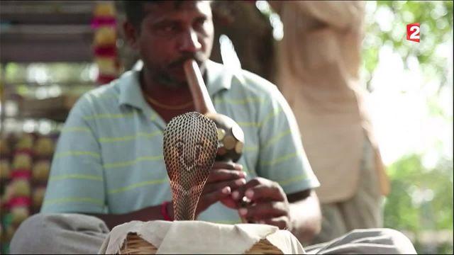 Inde : à la rencontre des Kalbelia, des charmeurs de serpents