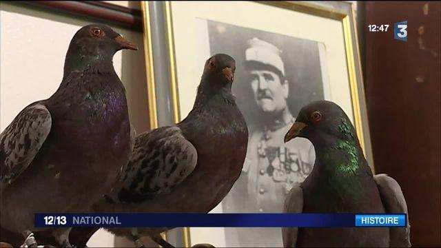 Verdun : Vaillant, le pigeon de combat