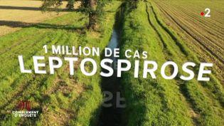 """Zoonoses : la leptospirose, ou """"maladie du rat"""", estla plus répandue dans le monde (COMPLÉMENT D'ENQUÊTE/FRANCE 2)"""