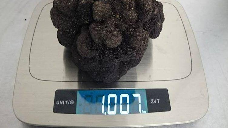 """La""""truffe exceptionnelle"""" de 1,007 kg trouvée mercredi 2 décembreà la lisière de l'Entre-deux-Mers (nord-est de Bordeaux). (FRANCE 3 AQUITAINE)"""