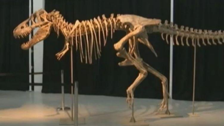 Le squelette deTyrannosaurus bataar, cousin du Tyrannosaurus rex, vendu, dimanche 20 mai, 1,05 million de dollars (820 000 euros) à New York (Etats-Unis). (APTN / FTVI)