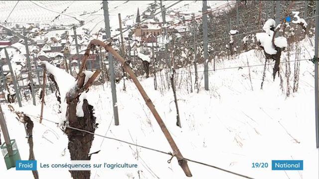 Froid : les conséquences sur l'agriculture