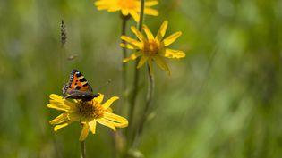 """L'association France NatureEnvironnement attend du plan biodiversité présenté par le gouvernement mercredi qu'il soit""""cohérent, ambitieux, qui ne touche pas seulement des choses ponctuelles."""" (JEAN-CHRISTOPHE VERHAEGEN / AFP)"""