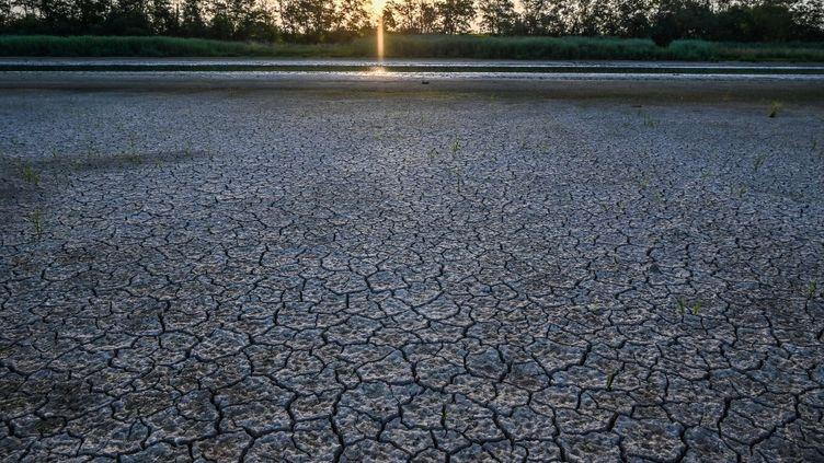 Un étang asséché à Villars-les-Dombes (Ain) dans le centre-est de la France, le 24 juillet 2019 (PHILIPPE DESMAZES / AFP)