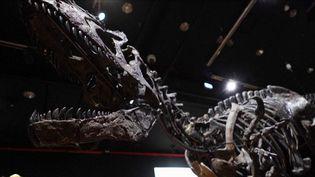 Dinosaure : le squelette de Big Sarah fait des envieux (France 3)