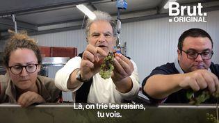 VIDEO. Sensible à la cause animale,Raphaël Mezrahia créé un champagne 100 % vegan  (BRUT)