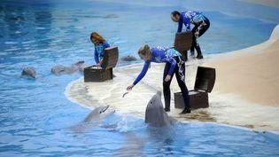 Les huit dauphins et les cinq otaries du Parc seront transférés dans d'autres delphinariums européens. (OLIVIER ARANDEL / MAXPPP)
