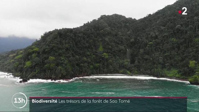 Biodiversité : la forêt de São Tomé, un joyau brut classé par l'Unesco