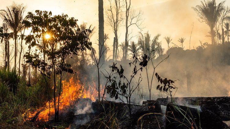 La forêt amazonienne en feu, dans la région de Para, au Brésil, le 28 août 2019. Le mois d'août 2019 a été le plus destructeur des neuf dernières années. (GUSTAVO BASSO / NURPHOTO / AFP)