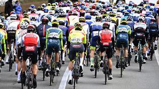 Le peloton du Tour d'Italie va s'élancer vers Novara, arrivée de la 2e étape. (DIRK WAEM / BELGA)