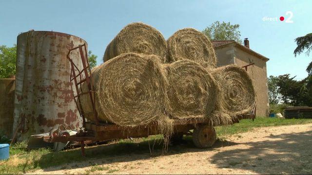 Suicides : les agriculteurs du Gers n'en peuvent plus
