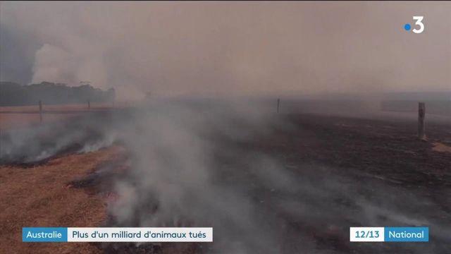 Australie : la faune, première victime des incendies
