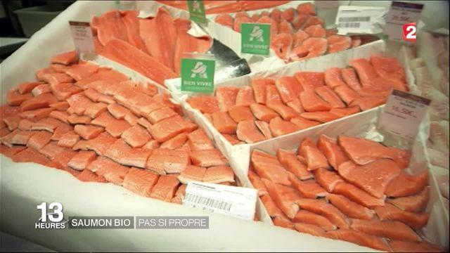 Alimentation : le saumon bio est plus toxique que le saumon conventionnel