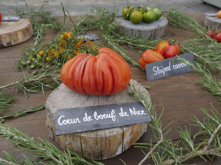 Quelques-unes des 750 variétéscultivées au Conservatoire de la tomate, à la Bourdaisière, en Touraine. (ISABELLE MORAND / RADIO FRANCE / FRANCE INFO)