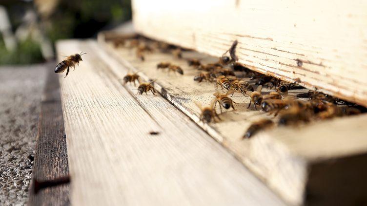 Des abeilles dans une ruche (illustration). (JEAN FRAN?OIS OTTONELLO / MAXPPP)