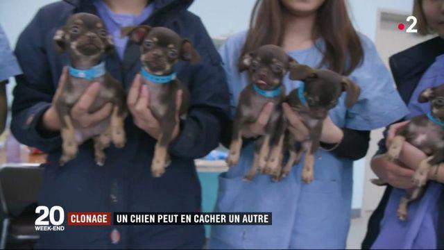 Corée du Sud : le clonage des chiens en pleine expansion