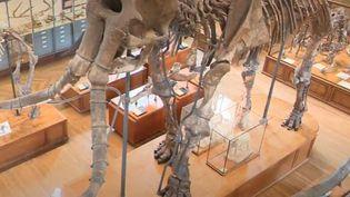 Gard : une cagnotte pour restaurer le squelette du mammouth de Durfort (CAPTURE D'ÉCRAN FRANCE 3)