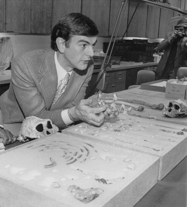 Donald Johanson tient dans sa main des ossements de Lucy,à Cleveland (Ohio), peu après sa découverte en novembre 1974. (BETTMANN / GETTY IMAGES)