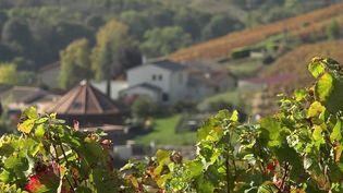 Santé publique France et l'ANSES lancent une vaste enquête pour évaluer l'impact des pesticides utilisés dans les vignobles sur la population vivant à proximité. Reportage dans le Beaujolais,mardi 19 octobre. (CAPTURE ECRAN FRANCE 2)