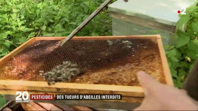 Pesticides : trois néonicotinoïdes dangereux pour les abeilles interdits