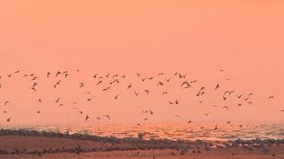 En Vendée, la baie de l'Aiguillon est l'endroit parfait pour observer la migration des oiseaux. Reportage. (CAPTURE ECRAN FRANCE 3)