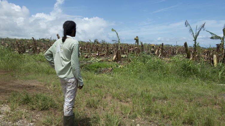 Un agriculteur observe les dégâts dans son exploitation de Capesterre-Belle-Eau, en Guadeloupe, le 22 septembre 2017, après le passage de l'ouragan Maria. (HELENE VALENZUELA / AFP)