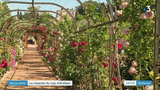 Alpes-Maritimes : à la découverte des jardins de la Villa Eilenroc