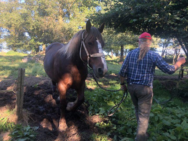 Eric Abrassart, éleveur de chevaux, à Saint-Tugdual (Morbihan), le 8 septembre 2020. (JULIETTE CAMPION / FRANCEINFO)
